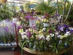 Bien choisir une plante en jardinerie