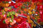 Diaporama : Les plus beaux feuillages d'automne