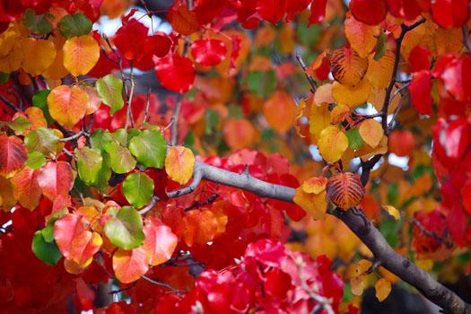 00-couleurs-d-automne