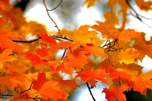 Un air de rentrée... (Les plus beaux feuillages d'automne)