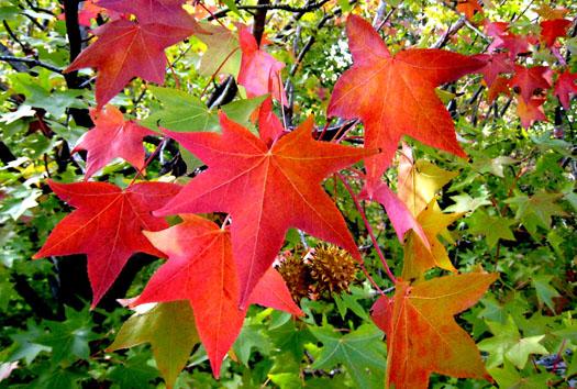 Un spectaculaire Américain (Les plus beaux feuillages d'automne)