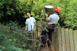 Abattage d'un arbre gênant