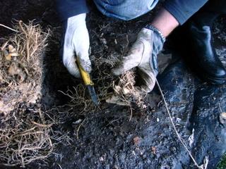 Conserver un maximum de racines