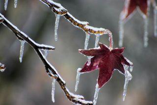 Comment les plantes se prot gent du froid for Les plantes et le gel