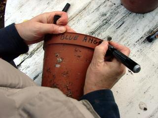 Marquez le nom des plantes sur les pots
