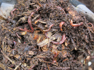 Paillis et compost