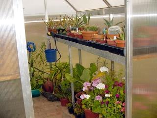 Une petite serre pour protéger les plantes fragiles de l'hiver.