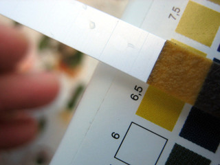 Test pour connaître le pH du sol