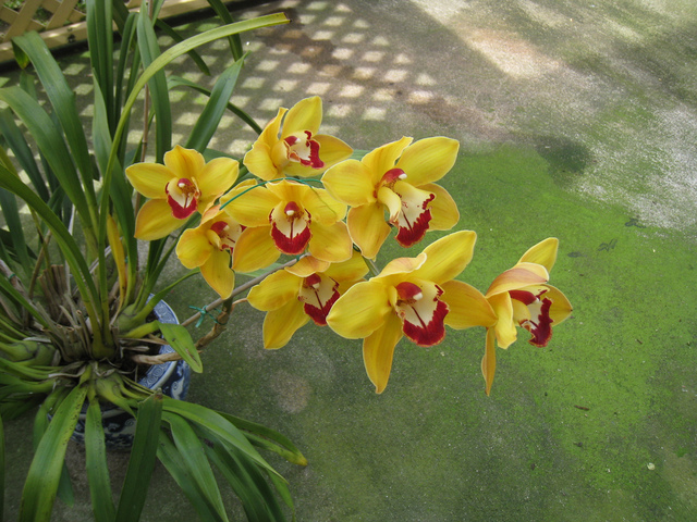 orchidee engrais special et fertilisation. Black Bedroom Furniture Sets. Home Design Ideas