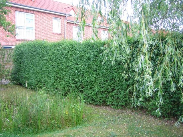 Les distances respecter lors de la plantation d 39 un arbre for Arbre de jardin pour ombre