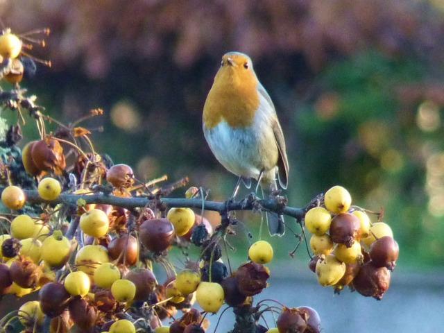 Arbustes pour petits oiseaux