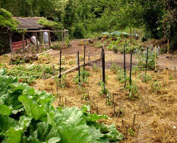 Un potager sans entretien quelles plantes astuces de for Amenagement jardin sans entretien