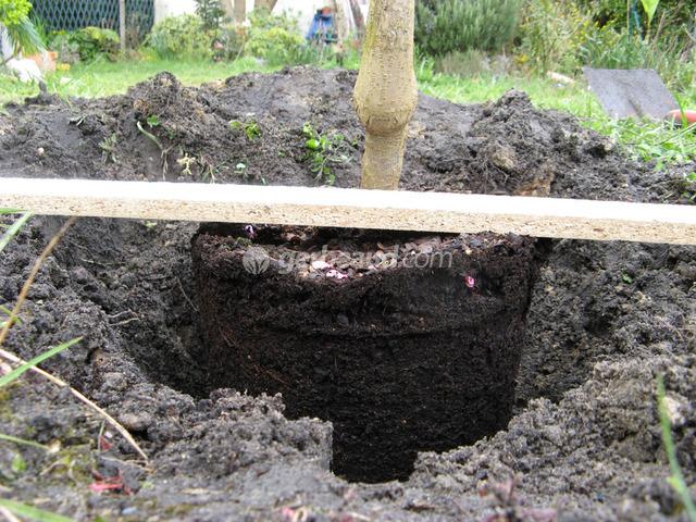 plantations : à quelle profondeur planter ?