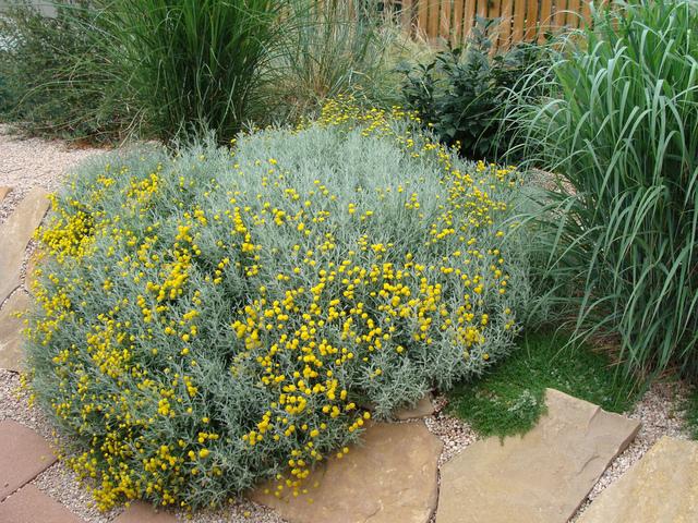 Les meilleures plantes pour un jardin de gravier