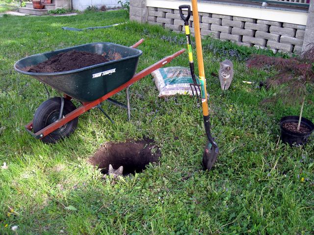 Cloture jardin pour chien lyon 27 for Cloture jardin pour chien