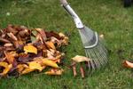 Compostez les feuilles mortes