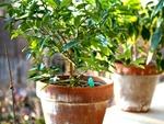 Les plantes méditerranéennes - fiches pratiques