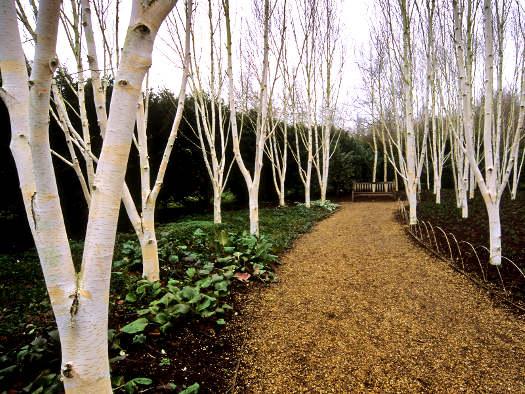 Corce blanc tout for Arbres decoratifs jardin