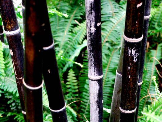 Sans oublier les bambous... (Ecorces décoratives)