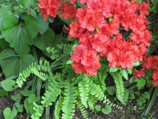 plante verte capillaire
