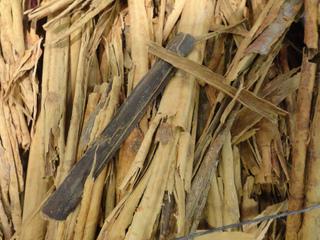 Cannelle de Ceylan - Séchage des écorces