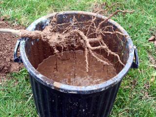 Le pralinage des racines
