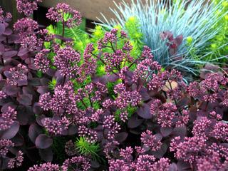 Rouge lumineux tout for Cactus exterieur resistant au froid