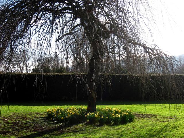 Xxx plantation d 39 un arbre quand o comment - Arbres de jardin ...