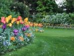 Une pelouse fleurie