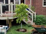 Comment bien planter un arbre