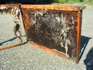 Conseils apiculture des mois de novembre, décembre et janvier