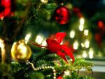 Diaporama : Noël : magie végétale