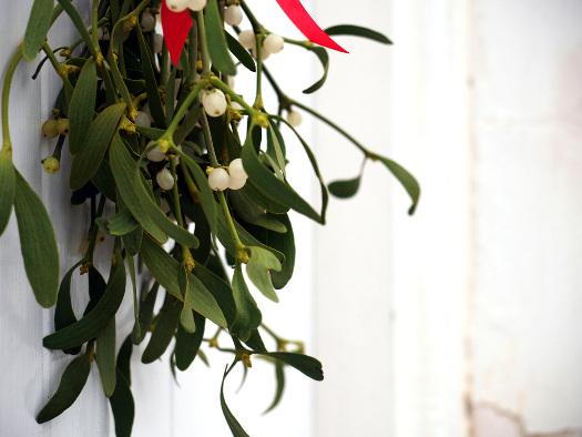 Le gui (Noël : magie végétale)