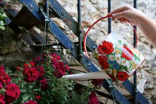 Arrosage d'une jardinière au goulot de l'arrosoir