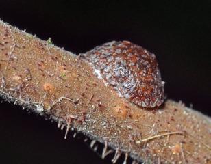 Plantes d'intérieur : soins bio