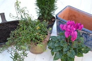 Eléments pour la jardinière