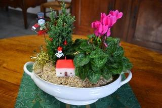 Composition de Noël avec cyclamen