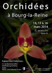 Expo orchidées 2014 à Bourg-la-Reine