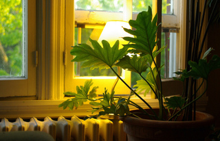 Plante d'intérieur près d'un radiateur