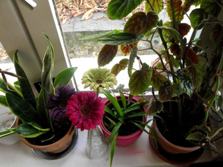 Plantes d'intérieur derrière une fenêtre