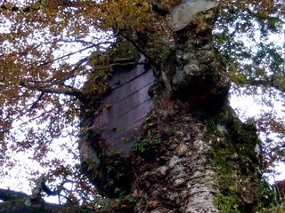 Creux d'arbre fermé