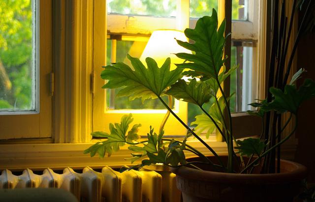 Plantes d 39 int rieur soins et conseils for Les plantes d interieur