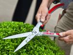 Arbustes : quand les tailler ?