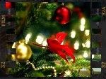 Noël : magie végétale