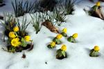 Diaporama : Des fleurs au coeur de l'hiver