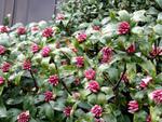 Le jardin en hiver - fiches pratiques