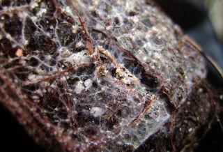 Mycorhizes : intérêt de cette association entre plantes et champignons