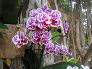 Orchidée - Exposition Jardin des Plantes 2013 / C.D.