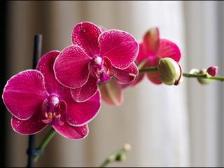 Plantes d'intérieur fleuries et faciles à cultiver