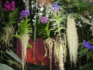 Orchidées - Grandes serres du Jardin des Plantes / C.D.